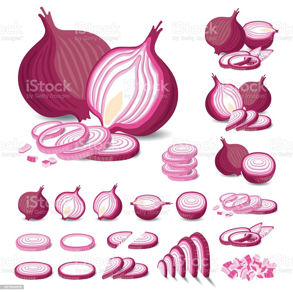 Red Onion Isolated Vector vector art illustration