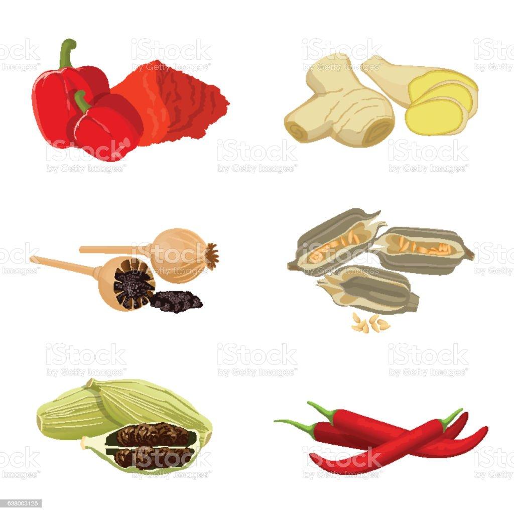 Red paprika, poppy seeds, piece of ginger, redchili, sesame vector art illustration