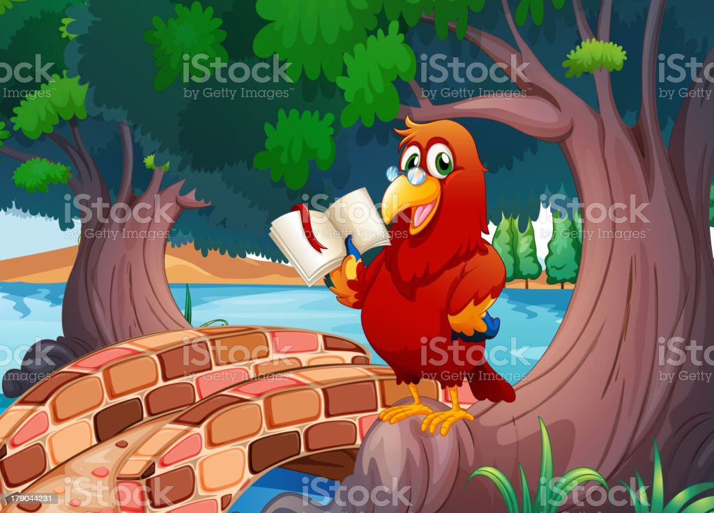 Red parrot reading a book royalty-free stock vector art