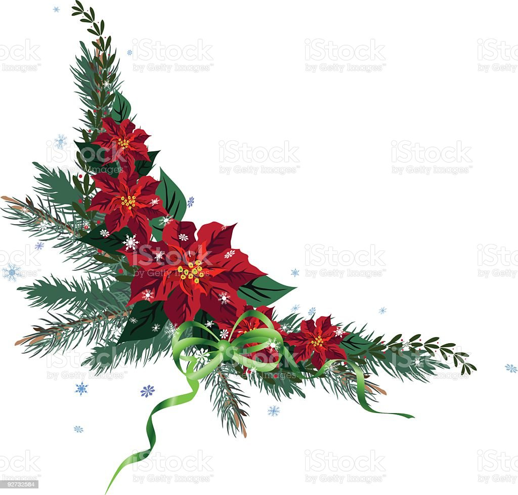 Red Poinsettia Flowers on Evergreen Twigs Corner Element royalty-free stock vector art