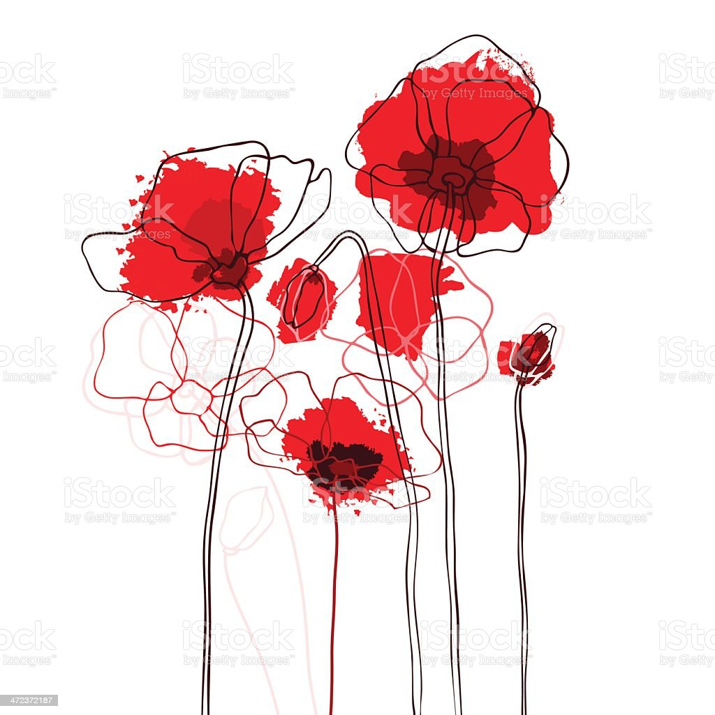 Red poppies on a white background vector art illustration