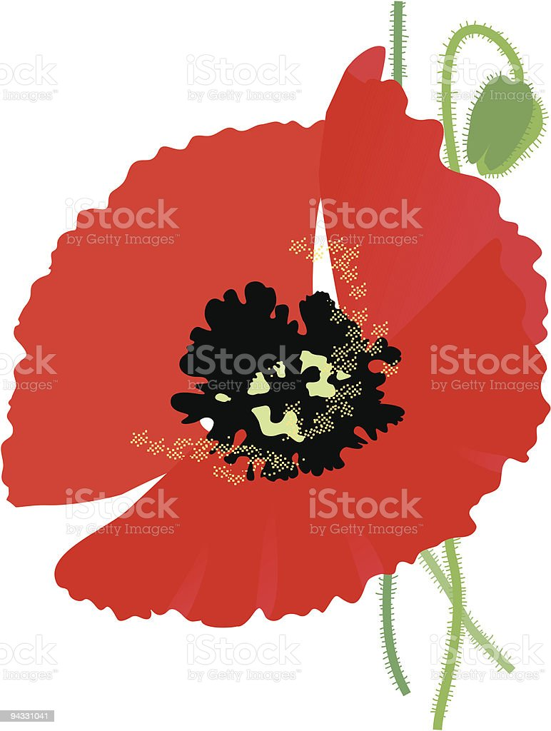 Red Poppy royalty-free stock vector art