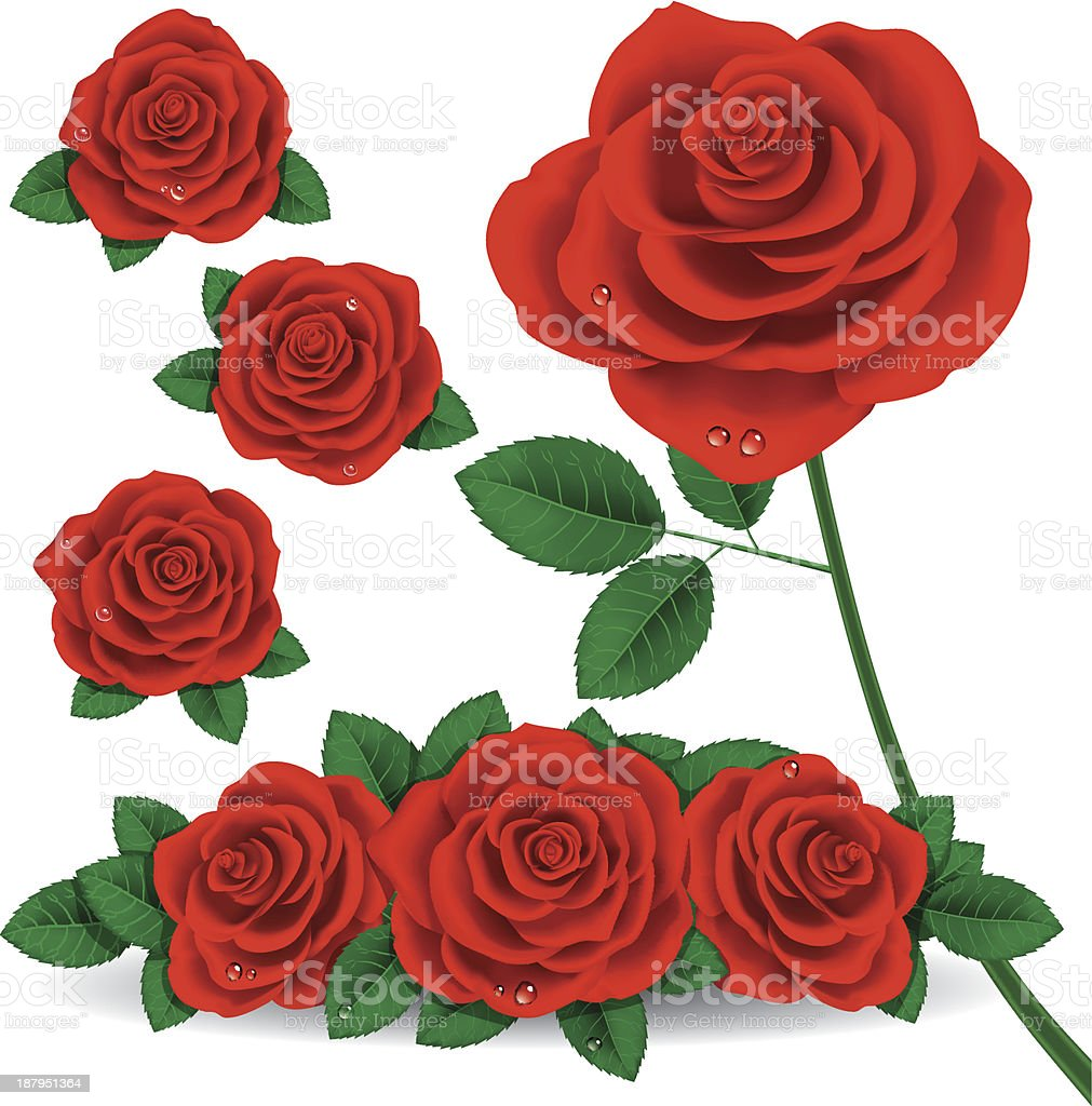 Red Rose vector art illustration