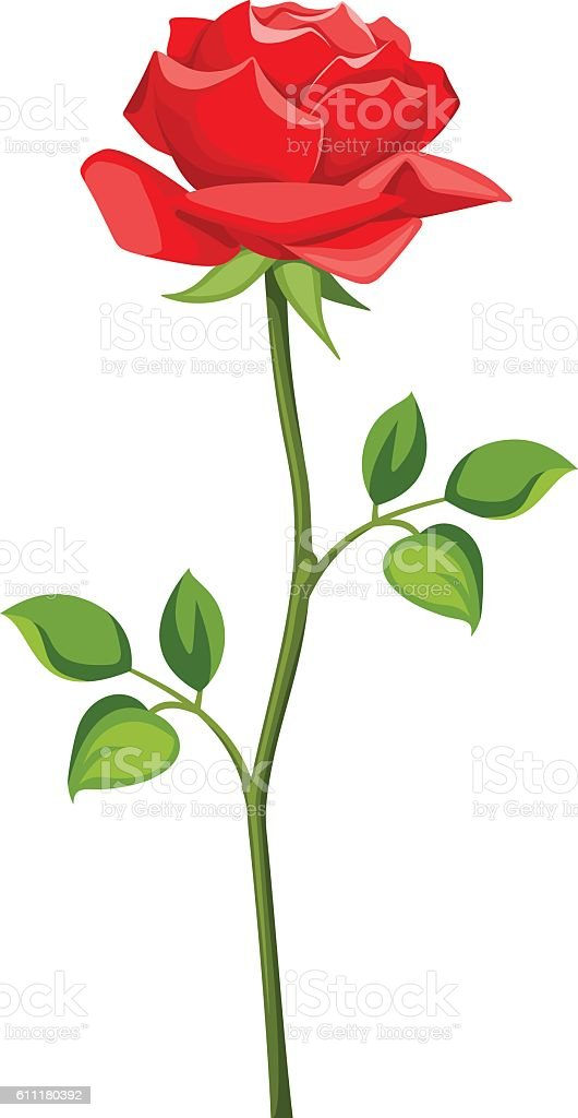 Red rose with stem isolated on white. Vector illustration. vector art illustration
