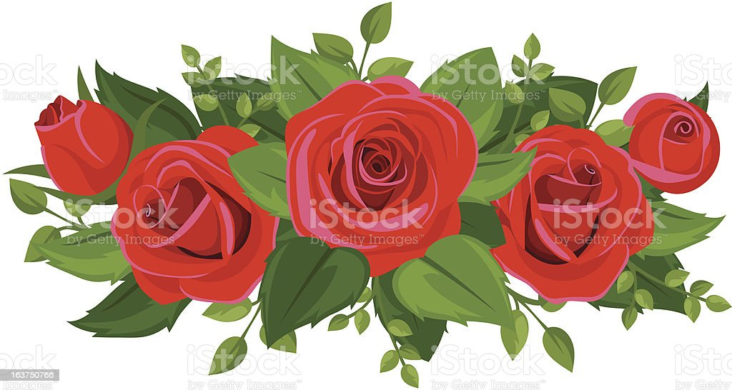 Red roses, rosebuds and leaves. Vector illustration. royalty-free stock vector art