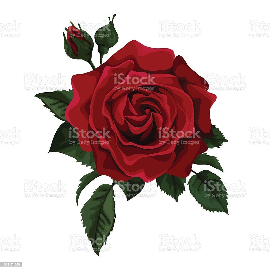 Red roses vector art illustration