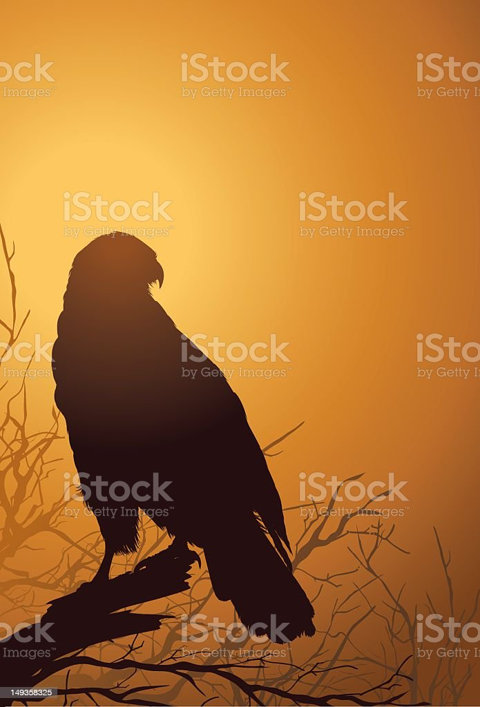 Red Tailed Hawk At Sunset royalty-free stock vector art