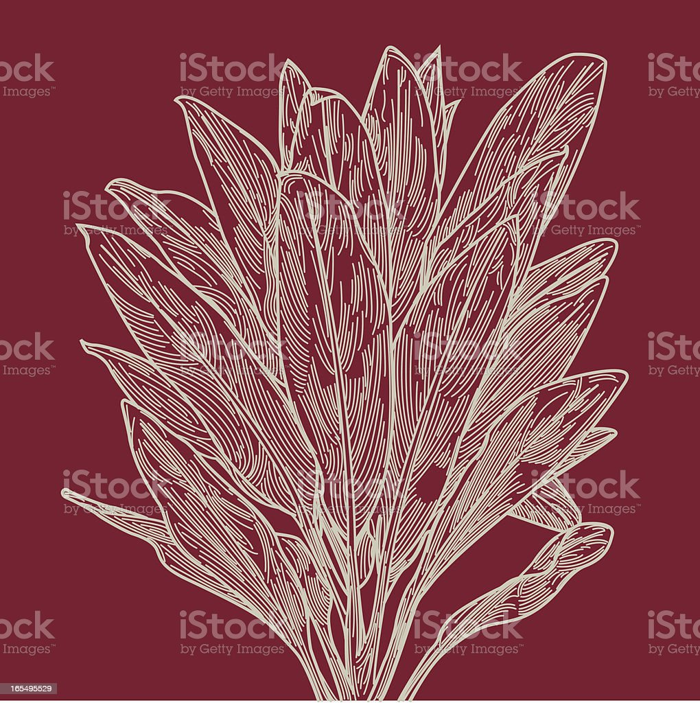 Red Ti Leaf Plant royalty-free stock vector art