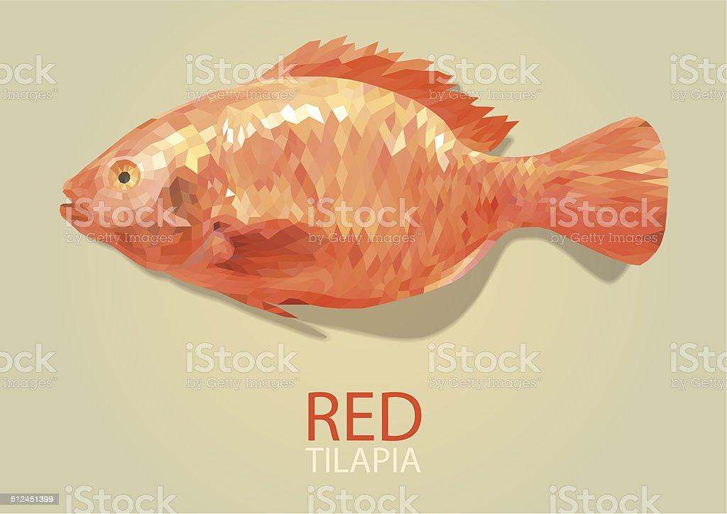 Red tilapia vector polygon vector art illustration
