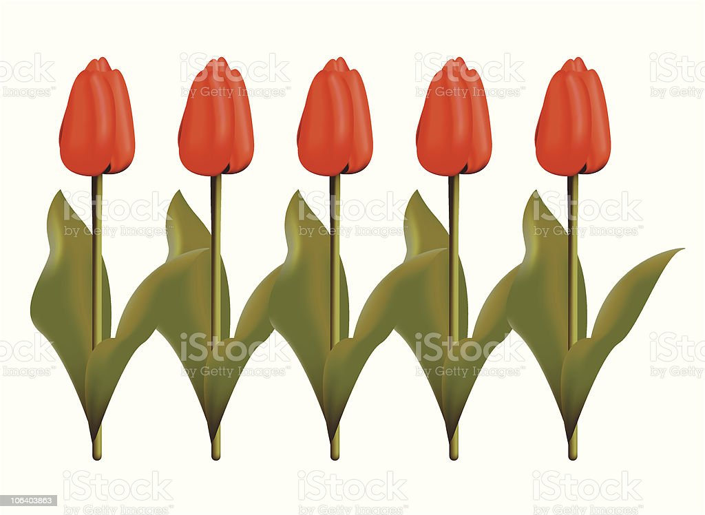Red Tulips vector art illustration