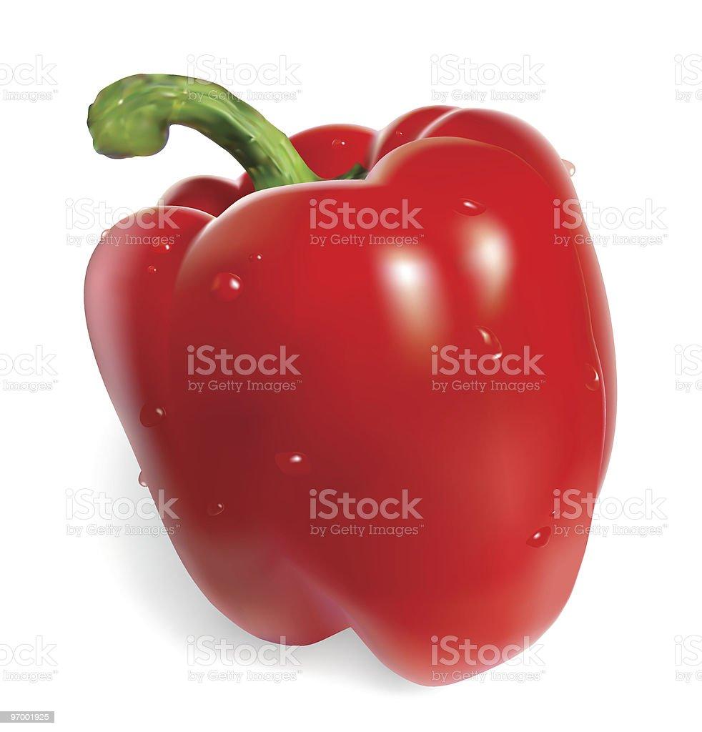 Red vector bell pepper vector art illustration