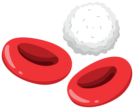 Red Blood Cell Clip Art, Vector Images & Illustrations ...