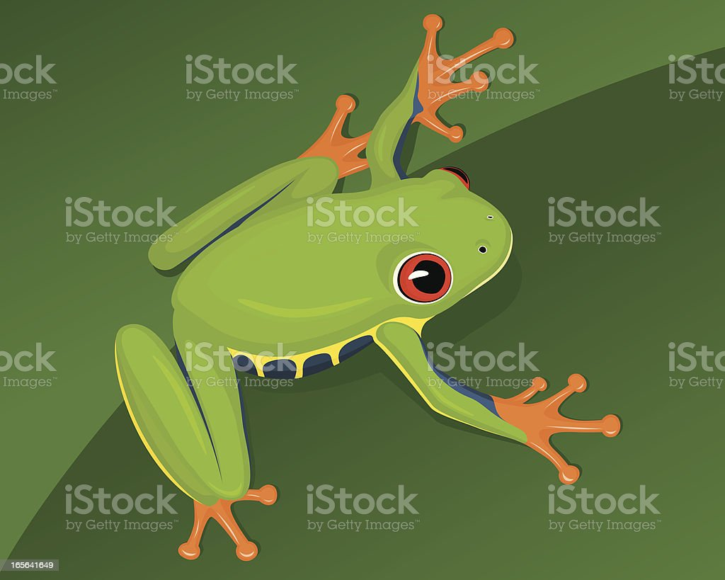 Red-Eyed Tree Frog royalty-free stock vector art