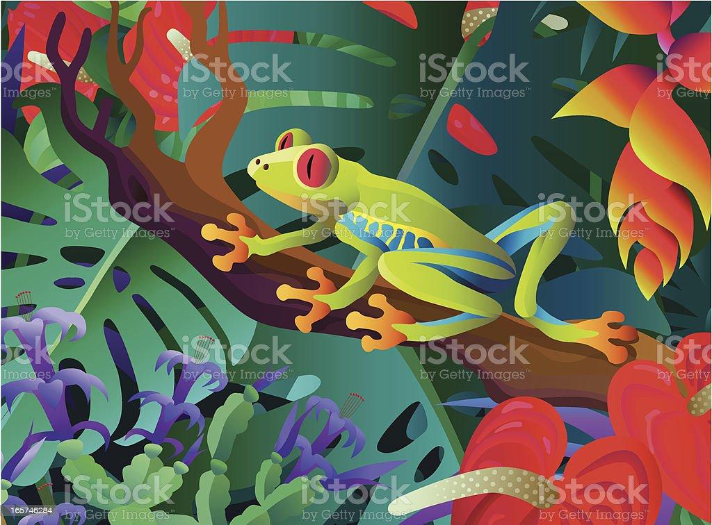 red-eyed tree frog vector art illustration