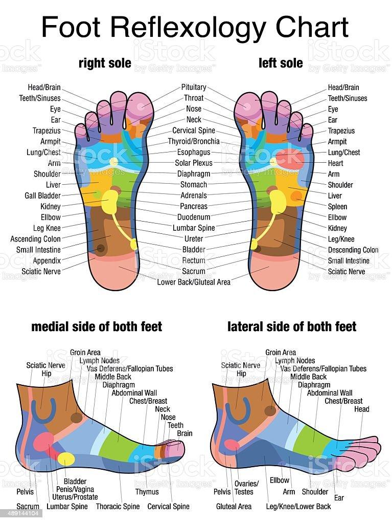 Reflexology Plantar Sole Profile Feet vector art illustration