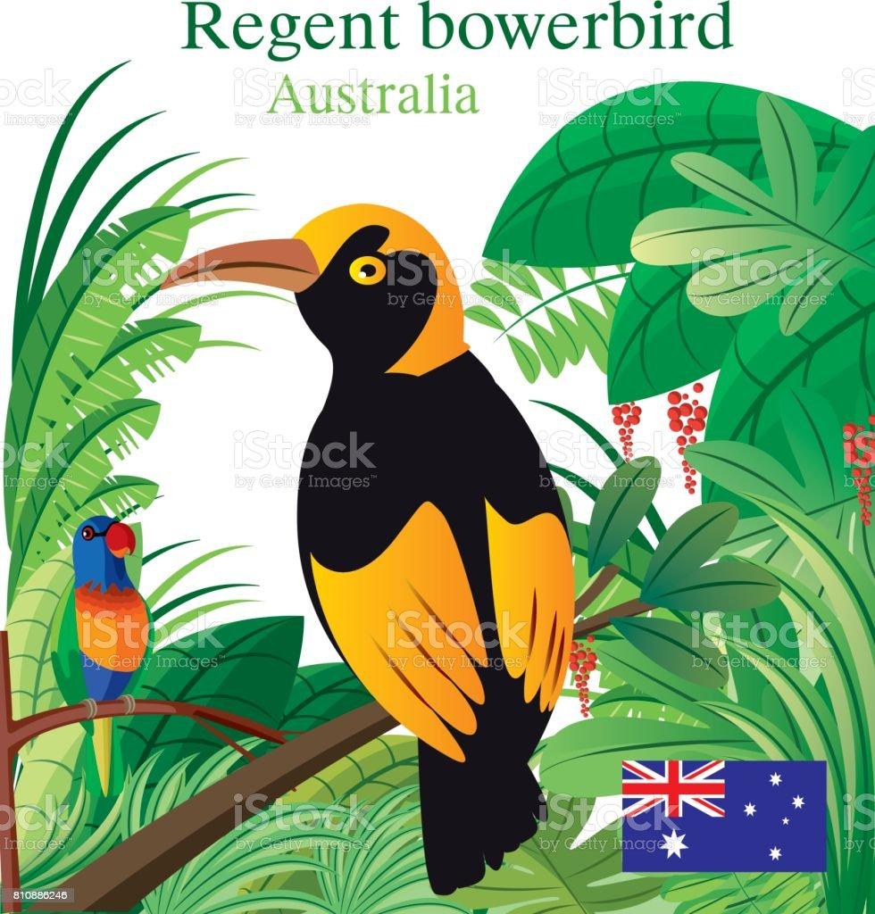 Regent Boverbird vector art illustration