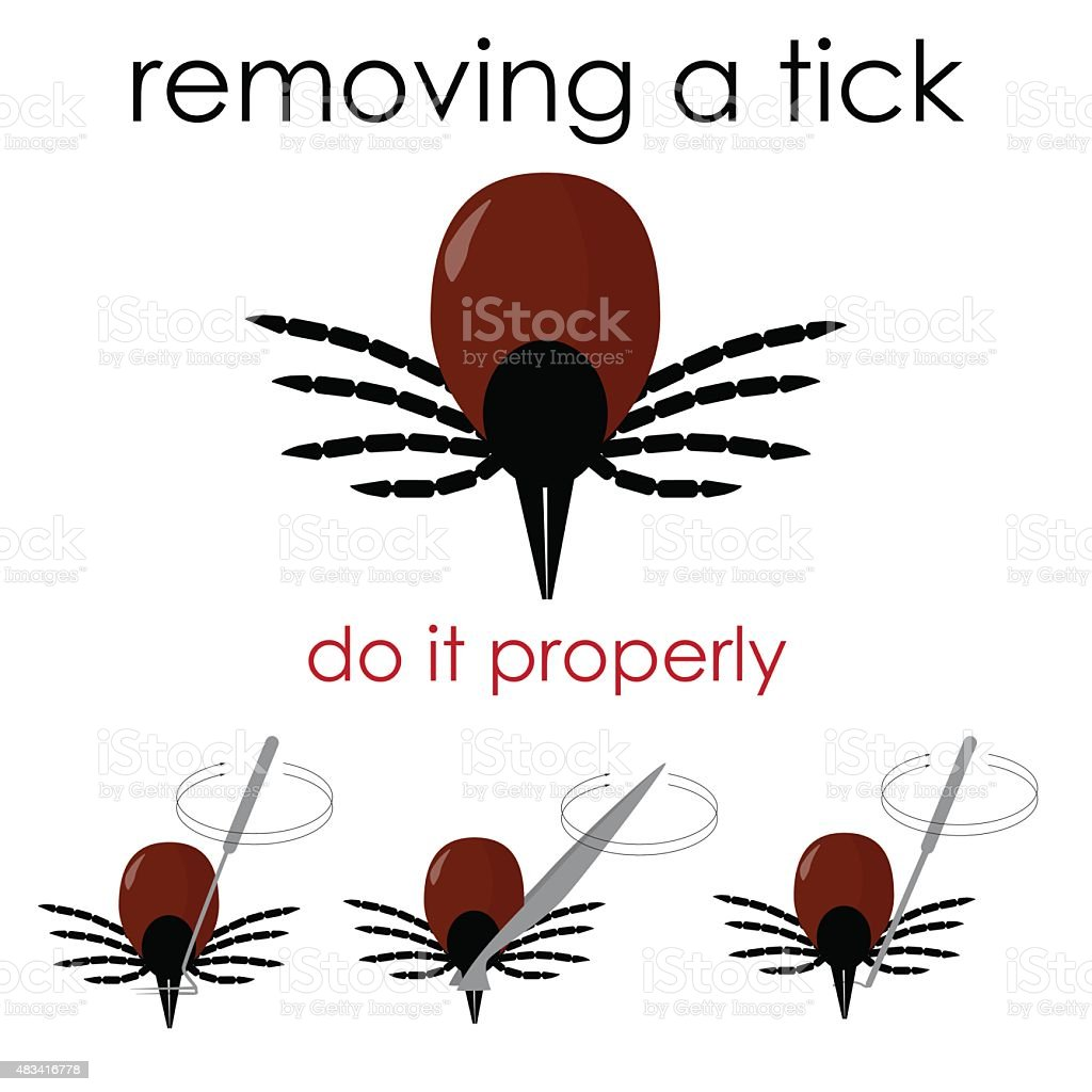 removing a tick vector art illustration