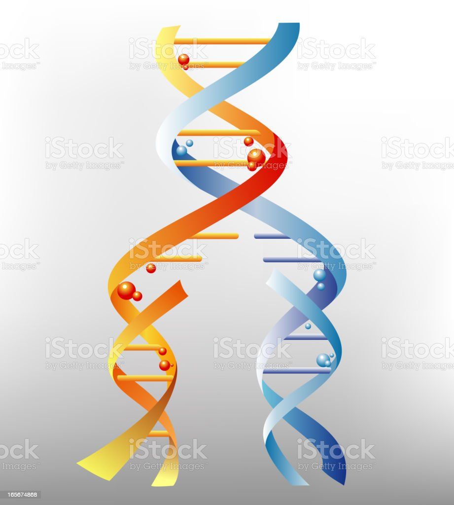 DNA Replication royalty-free stock vector art