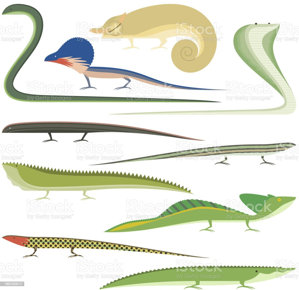 Reptile Cartoon Reptiles types set vector art illustration