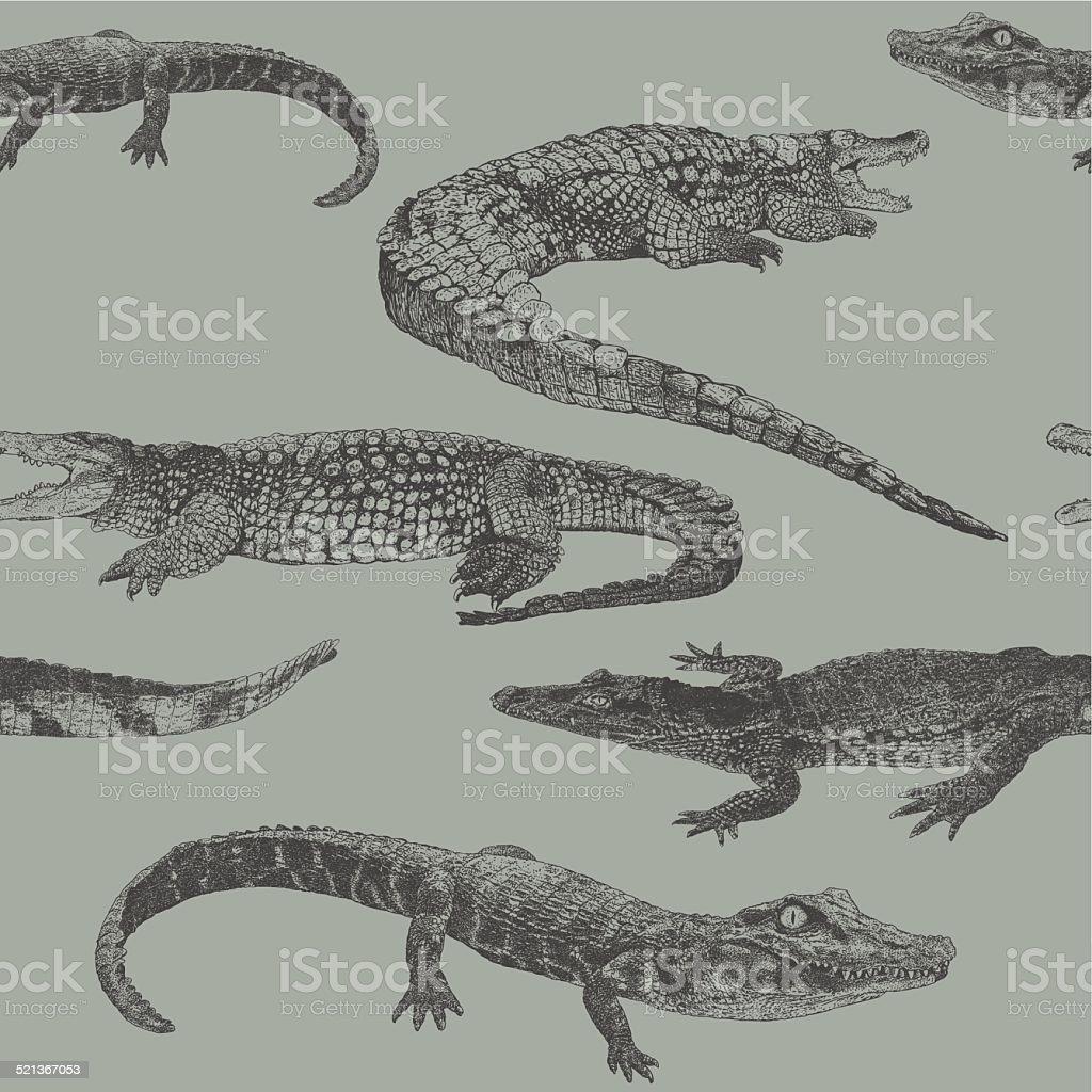 Reptile Rpt vector art illustration