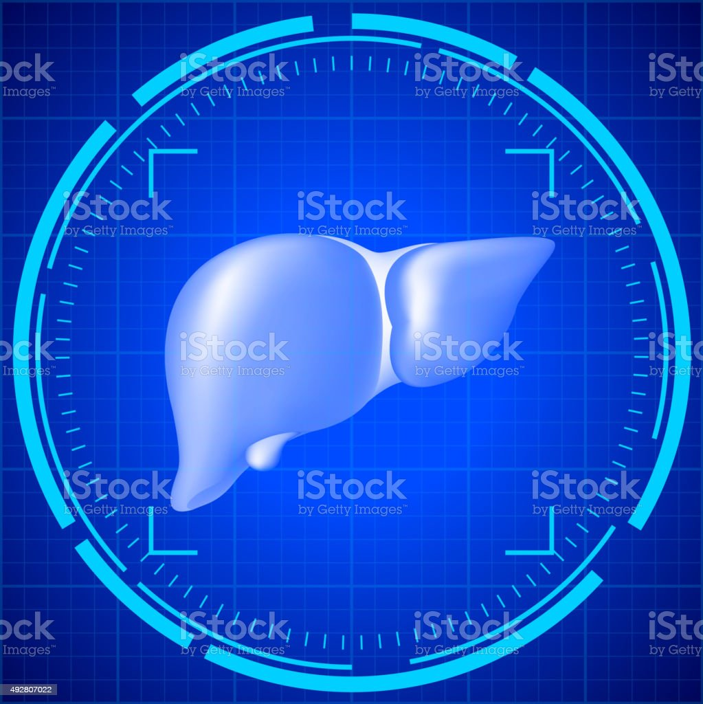 Research the liver vector art illustration
