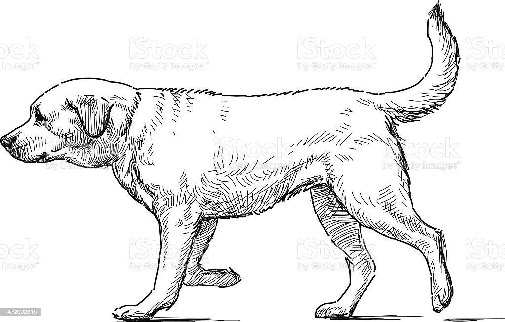 Retriever vector art illustration