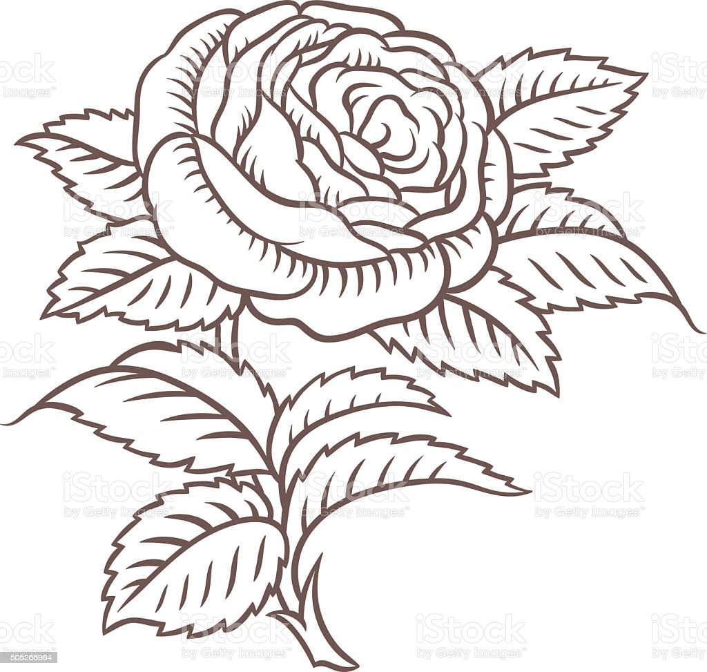 retro pink roses in classic style vector art illustration