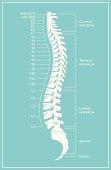 Retro Spine Diagram