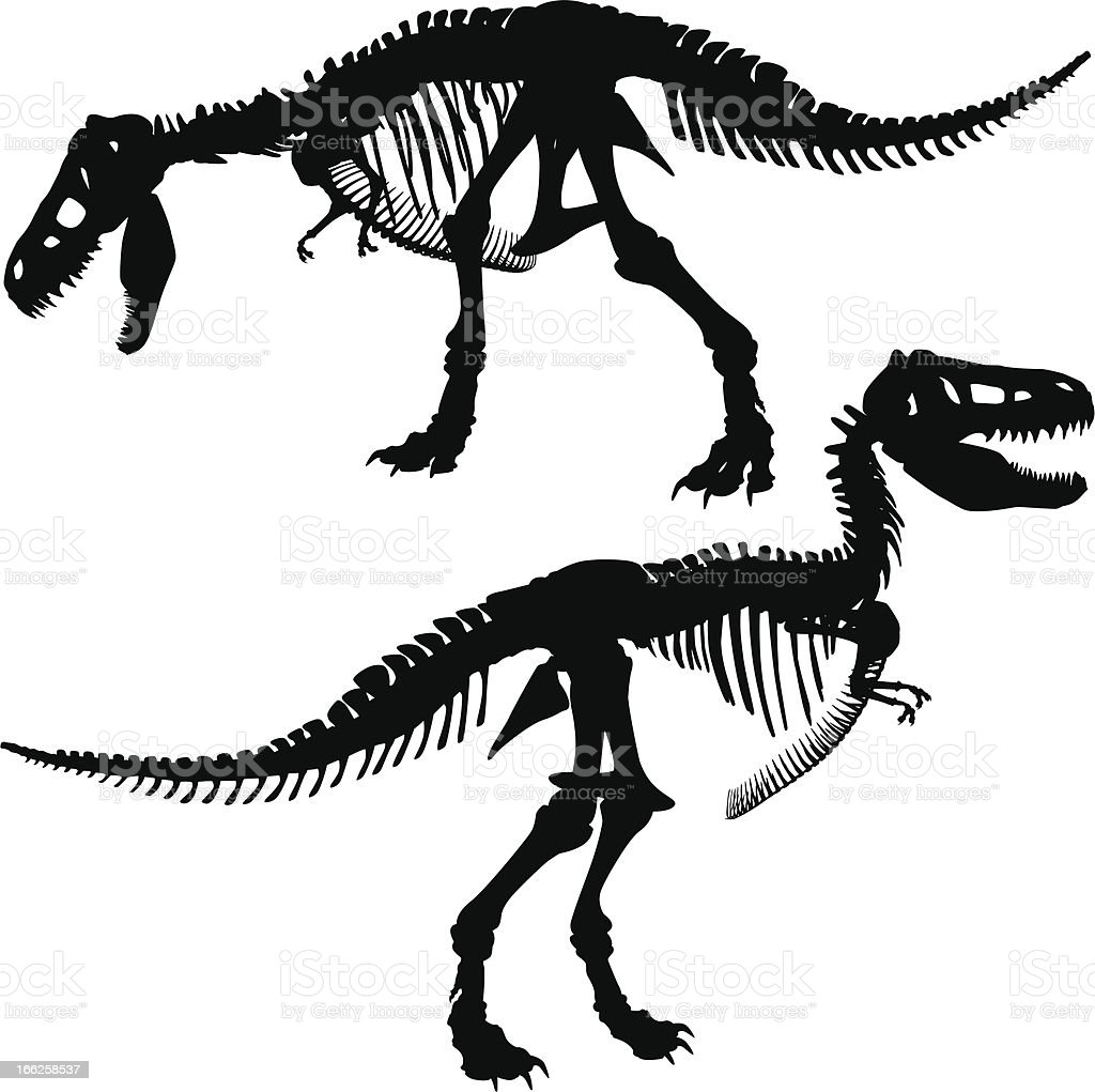 T rex skeleton royalty-free stock vector art