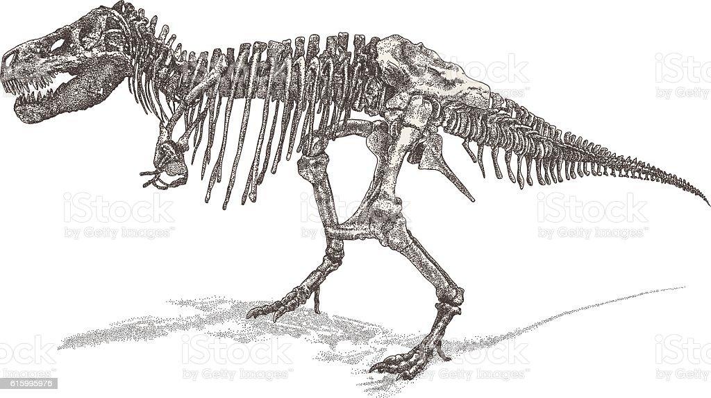 Trex Skelett Vektor Illustration 615995976
