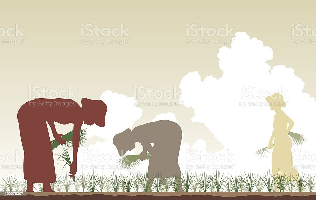 Rice planters vector art illustration