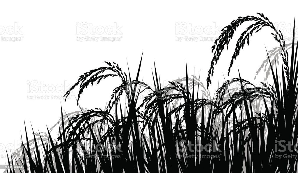 Rice ripe for harvest vector art illustration