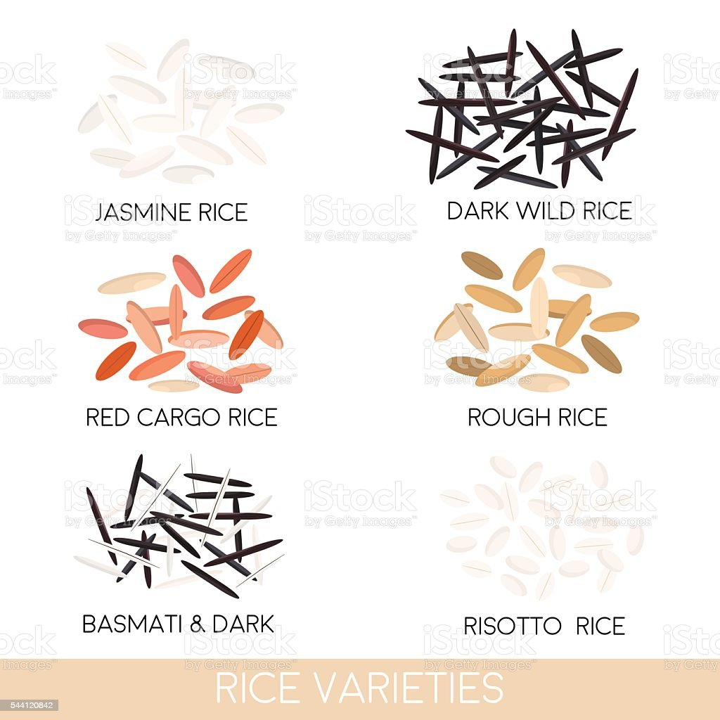 Rice varieties. Dark wild rice, risotto rice, jasmine rice, basmati, vector art illustration