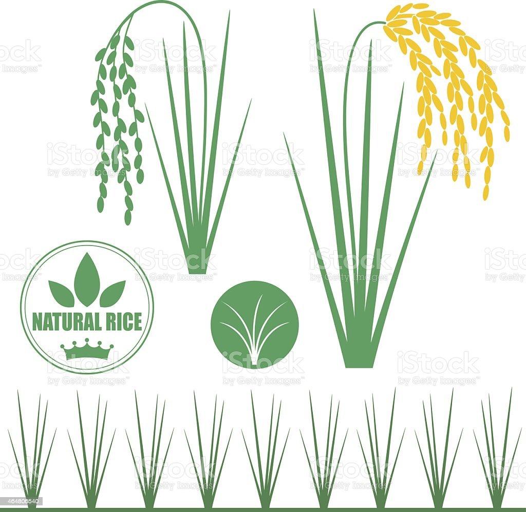 Rice vector art illustration