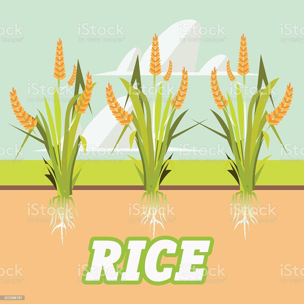 rice -vector illustration vector art illustration