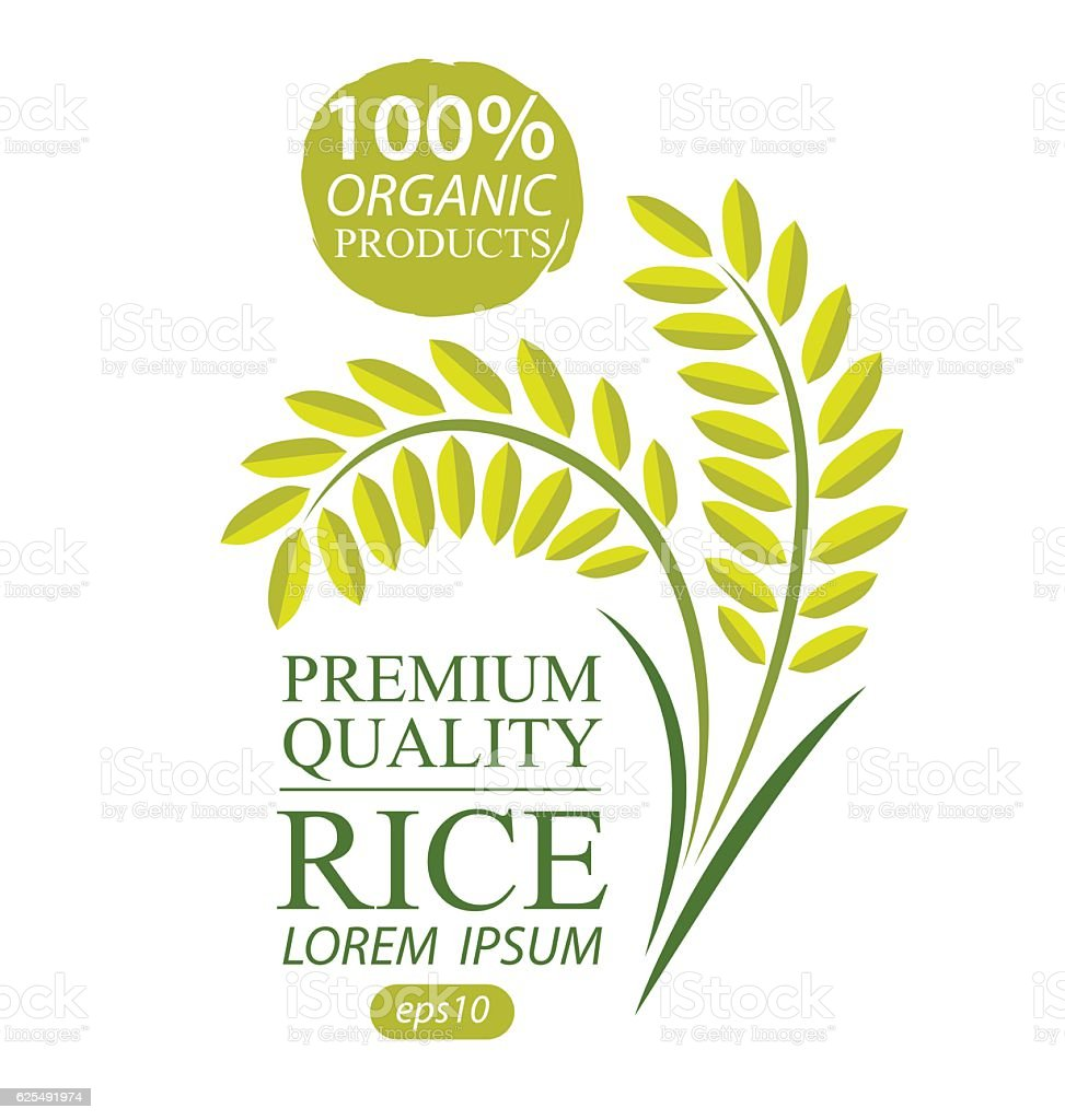 Rice. Vector illustration. vector art illustration