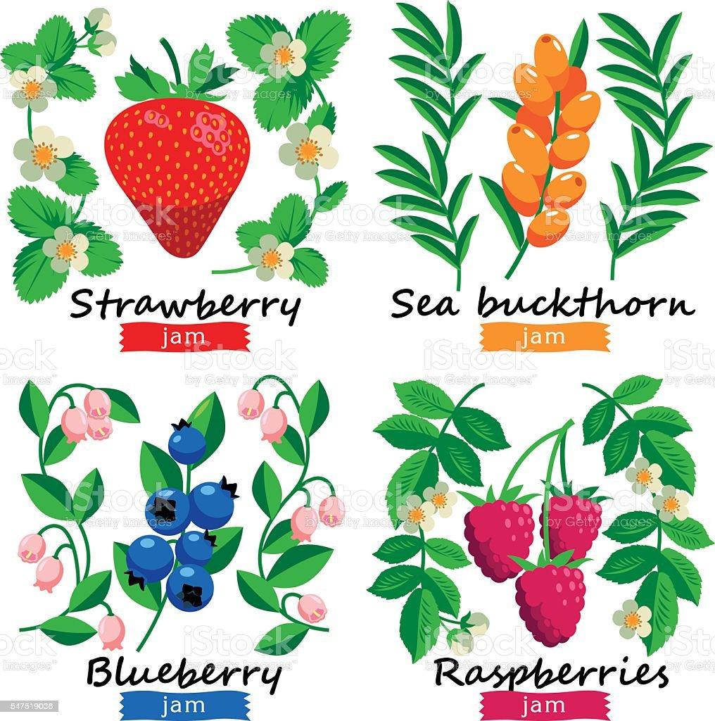 Ripe berries and flowers vector set. vector art illustration