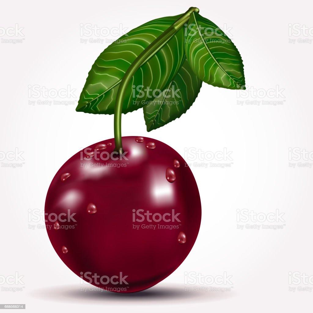 Ripe cherry vector art illustration