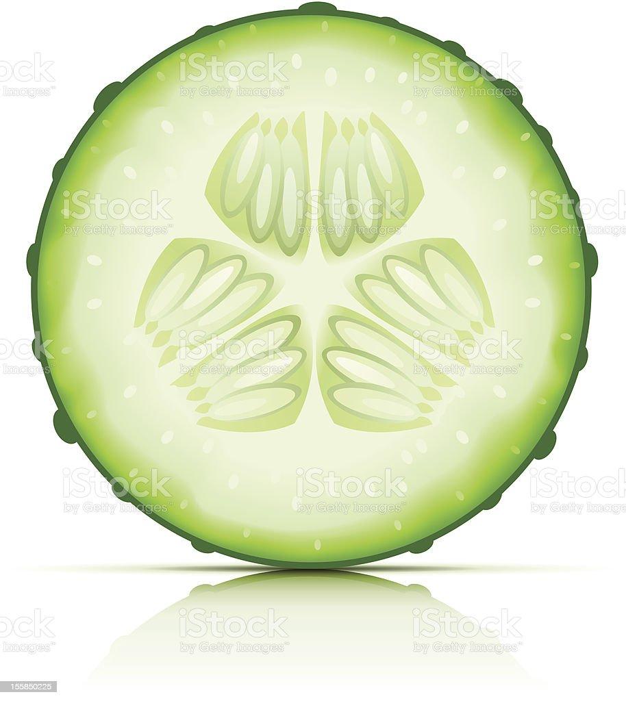 ripe cucumber cut segment royalty-free stock vector art