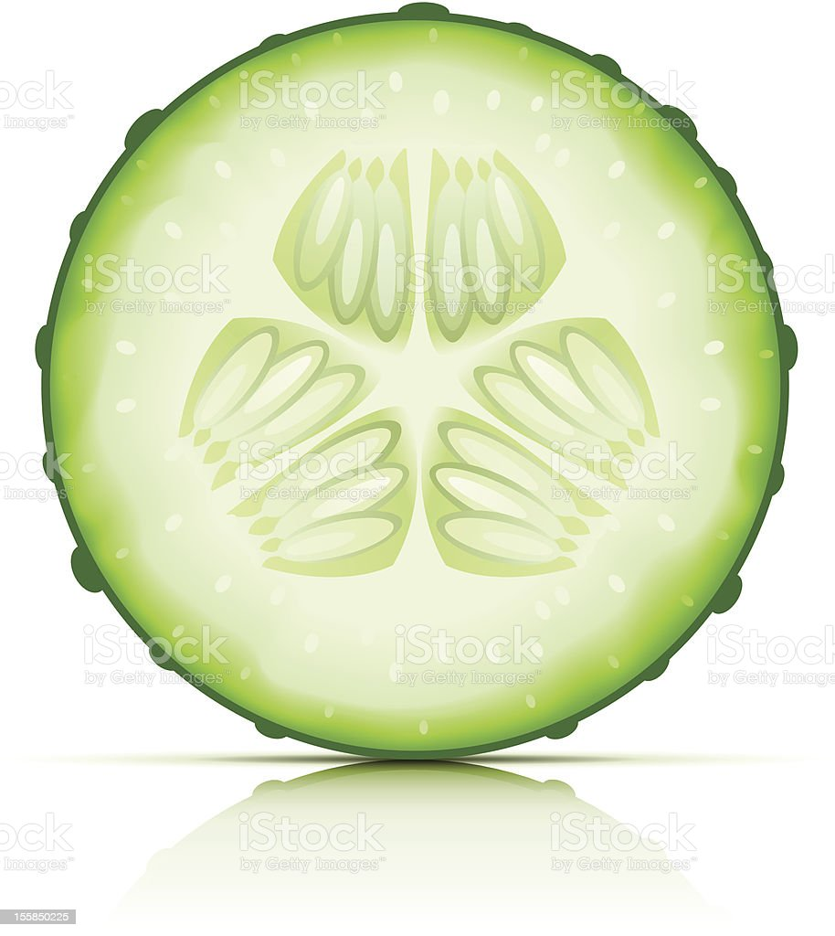 ripe cucumber cut segment vector art illustration