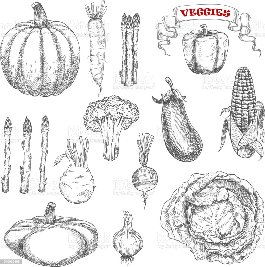 Ripe farm vegetables sketches set vector art illustration