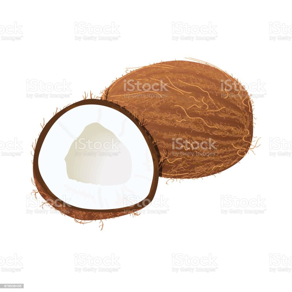 Ripe juicy coconut isolated on white. Whole and half vector art illustration