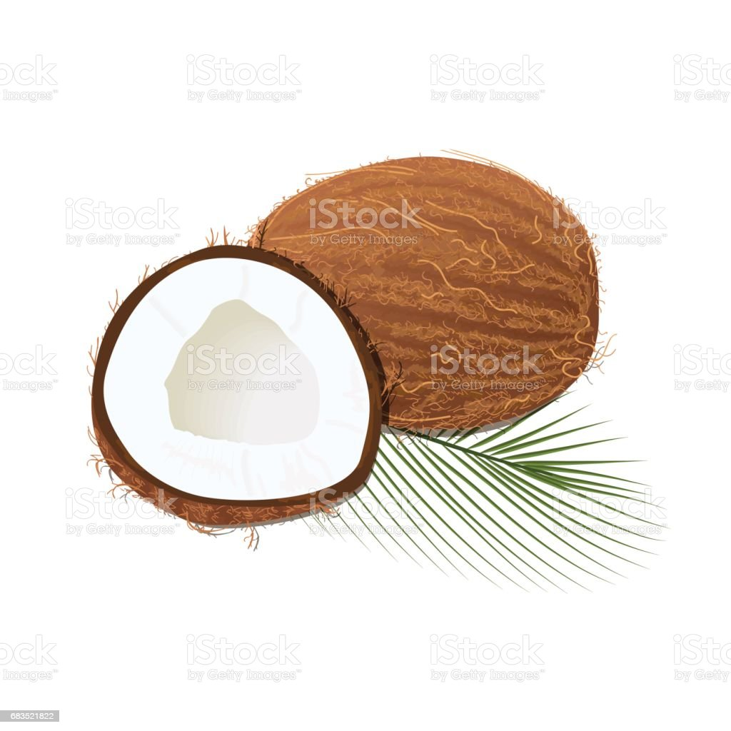 Ripe juicy coconut with leaf isolated on white. Whole and half vector art illustration