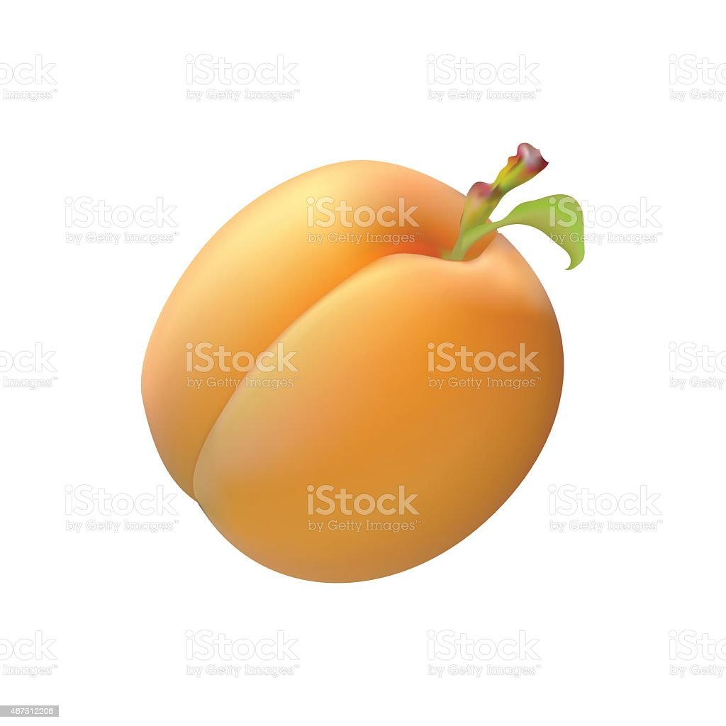 Ripe juicy yellow fruit apricot realistic image vector art illustration
