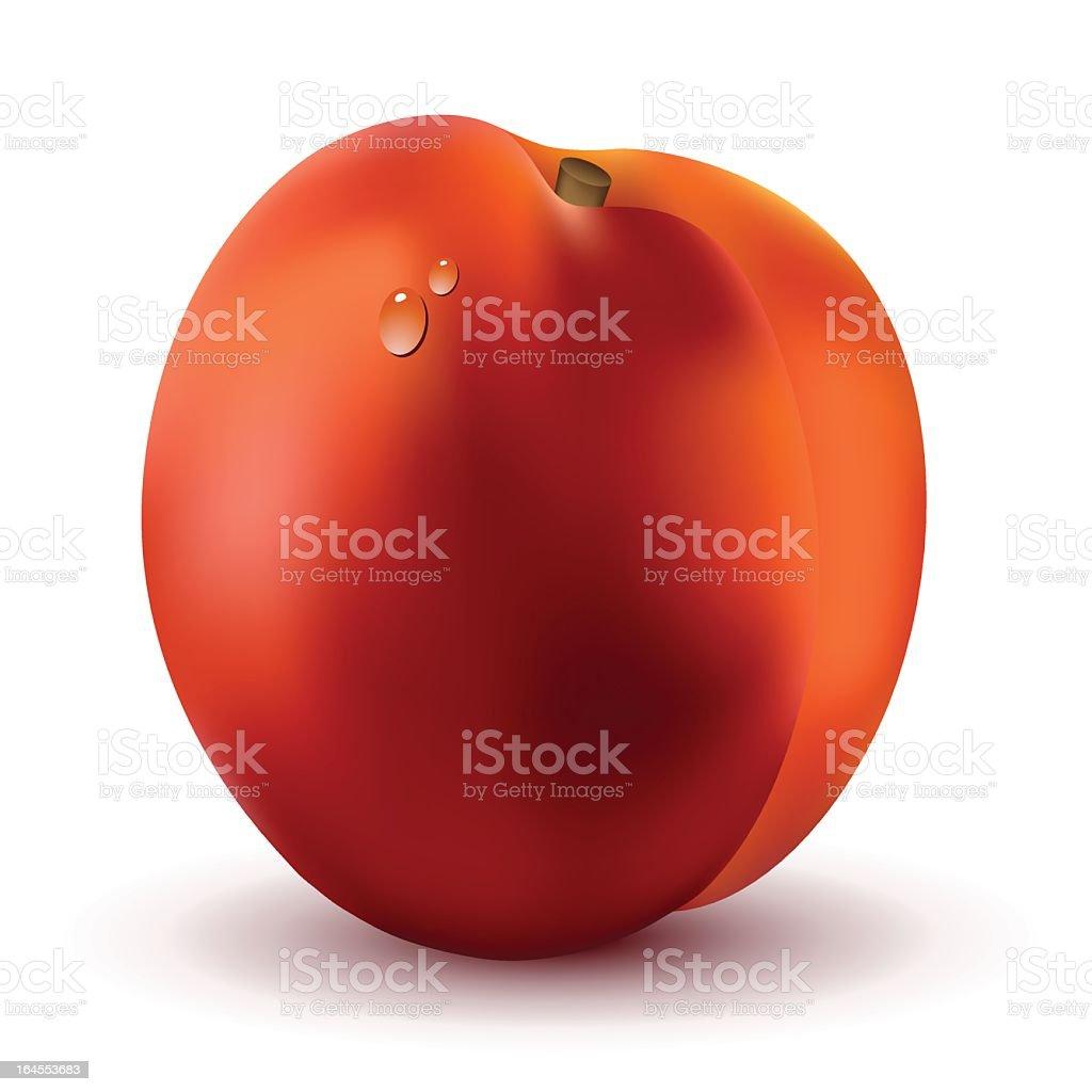 Ripe nectarine royalty-free stock vector art