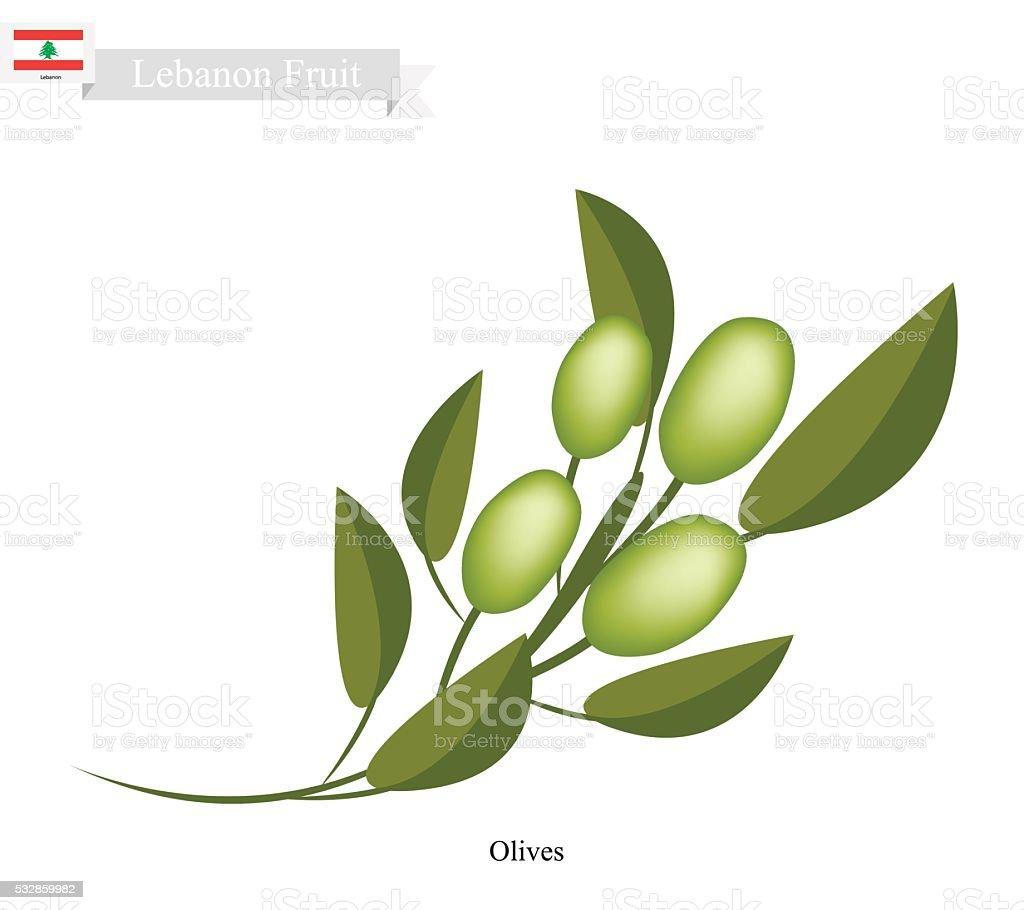 Ripe Olive, A Popular Fruit in Lebanon vector art illustration