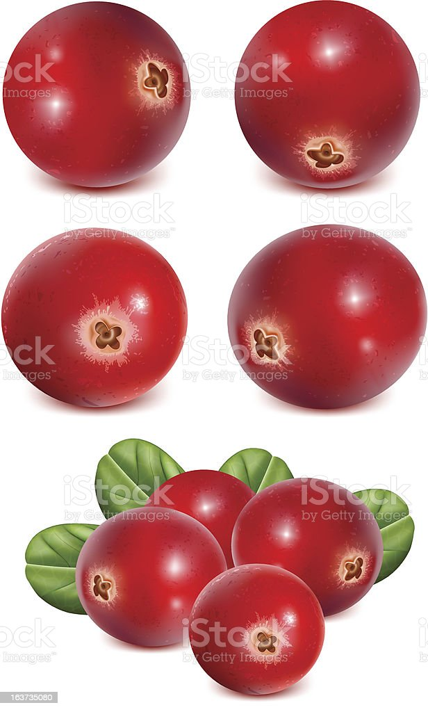 Ripe red cranberries with leaves vector art illustration