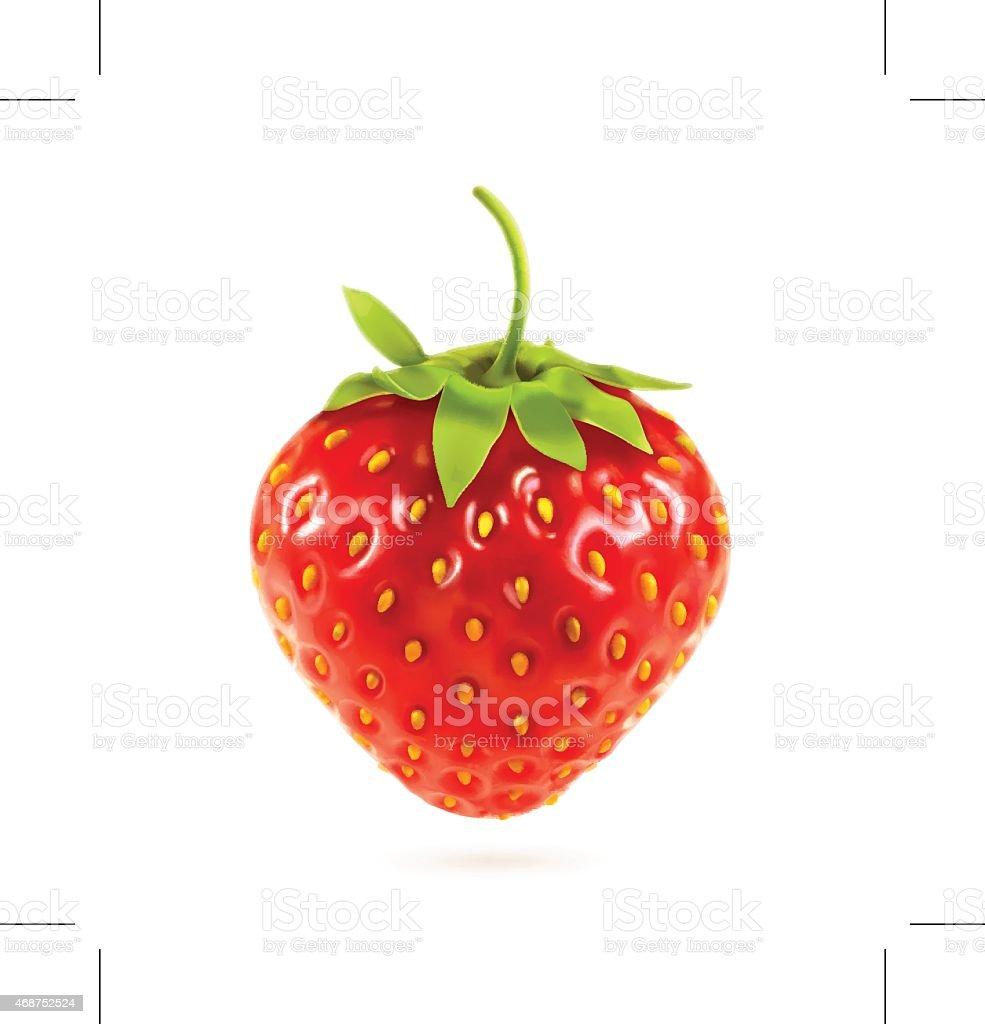 Ripe strawberry, vector illustration vector art illustration