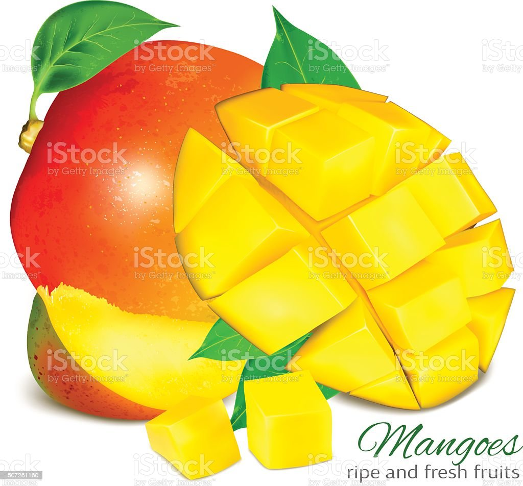 Ripe whole grapefruit with leaves. vector art illustration