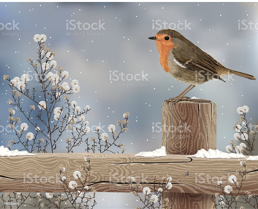 Robin on a Winter Day vector art illustration